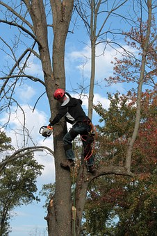 Who Is A Tree Surgeon?